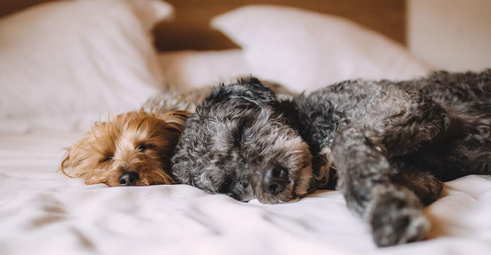 how to remove dog hair from bedding